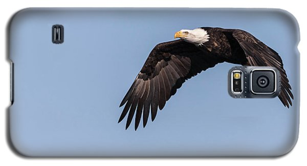 Galaxy S5 Case featuring the photograph American Bald Eagle 2017-14 by Thomas Young
