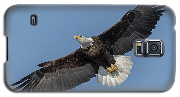 Galaxy S5 Case featuring the photograph American Bald Eagle 2017-18 by Thomas Young