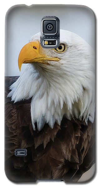 Galaxy S5 Case featuring the photograph American Bald Eagle Portrait by Angie Vogel