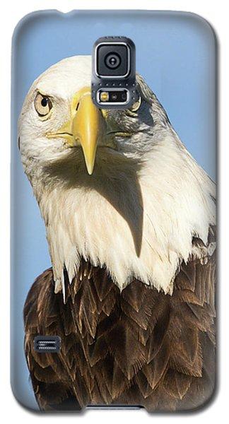 American Bald Eagle Portrait - Winged Ambassador Galaxy S5 Case