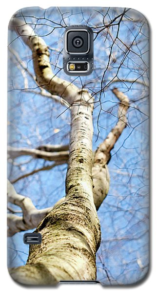 Galaxy S5 Case featuring the photograph American Beech Tree by Christina Rollo