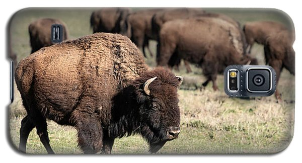 American Bison 5 Galaxy S5 Case