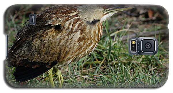 Galaxy S5 Case featuring the photograph American Bittern by Douglas Stucky