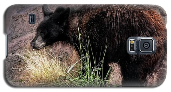 American Black Bear Cub Galaxy S5 Case by Elaine Malott
