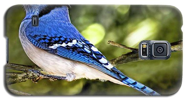 Blue Jay Bokeh Galaxy S5 Case