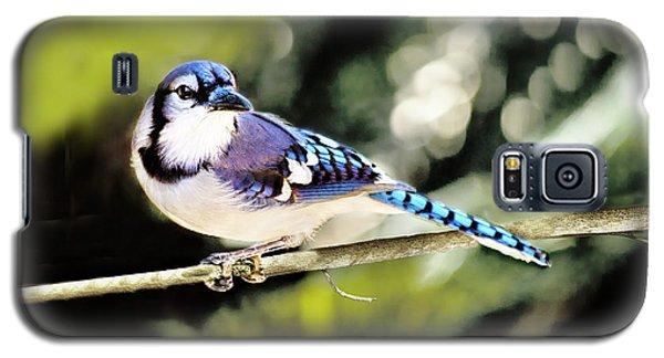 American Blue Jay On Alert Galaxy S5 Case