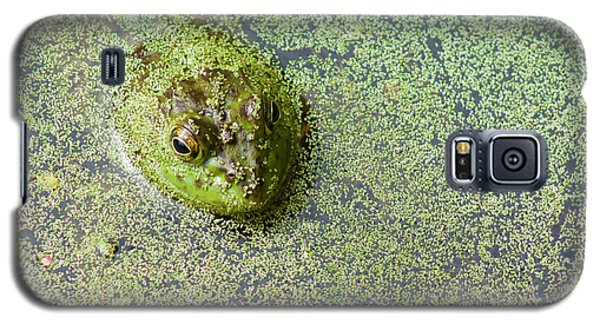 American Bullfrog Galaxy S5 Case by Sean Griffin