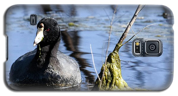 Galaxy S5 Case featuring the photograph American Coot by Gary Wightman