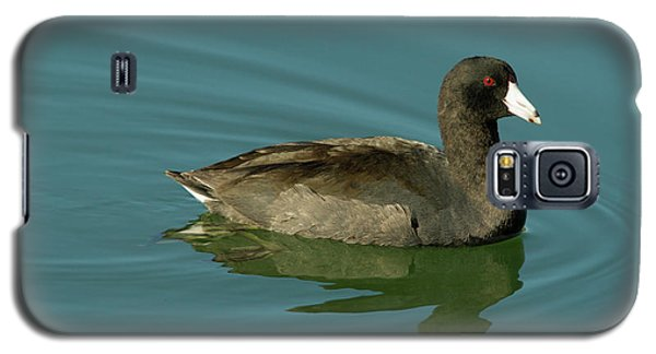American Coot Galaxy S5 Case