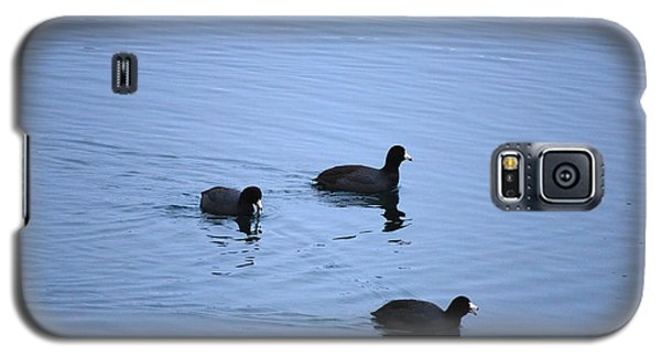 Galaxy S5 Case featuring the photograph American Coots 20120316_39a by Tina Hopkins