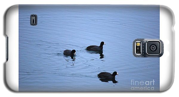American Coots 20120316_39a Galaxy S5 Case