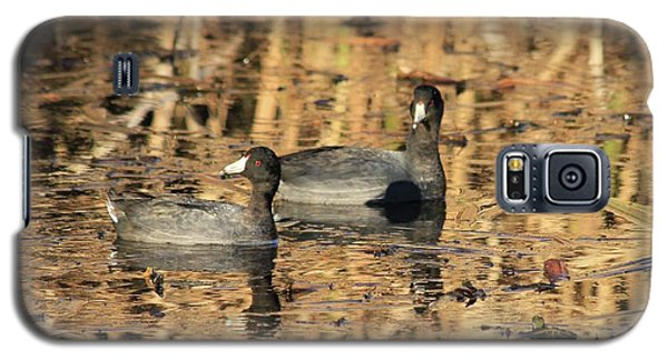 American Coots Galaxy S5 Case