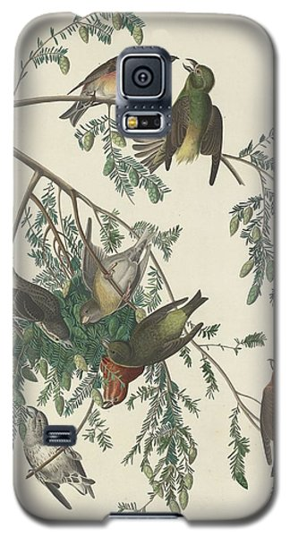 American Crossbill Galaxy S5 Case by Rob Dreyer