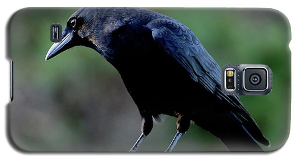 American Crow In Thought Galaxy S5 Case