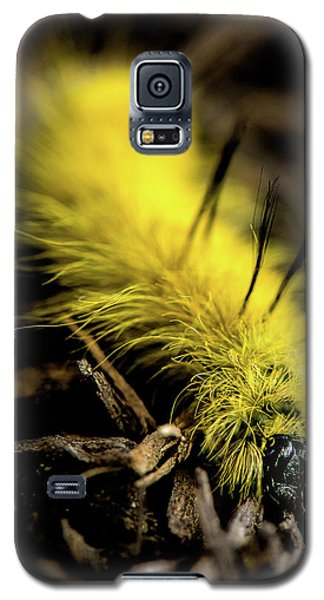 American Dagger Moth Caterpillar Galaxy S5 Case