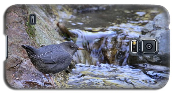 American Dipper Galaxy S5 Case by Angie Vogel