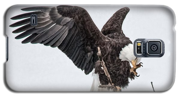 American Eagle  Galaxy S5 Case by Kelly Marquardt