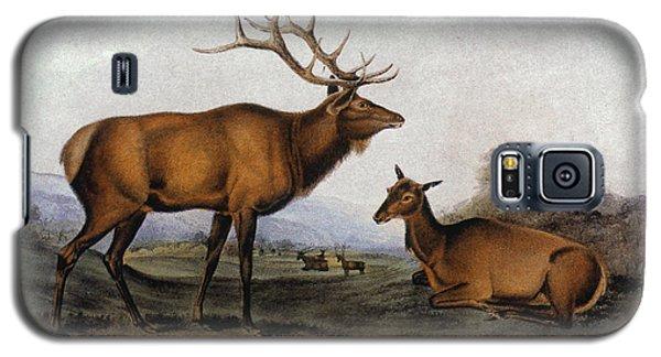 Audubon Galaxy S5 Case - American Elk, 1846 by Granger