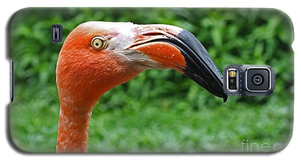 American Flamingo Galaxy S5 Case by Kevin McCarthy