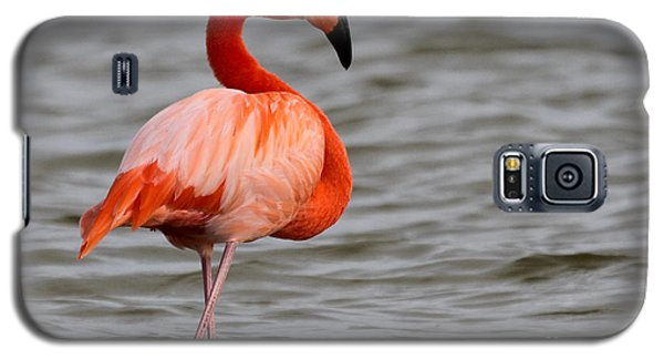 American Flamingo Galaxy S5 Case