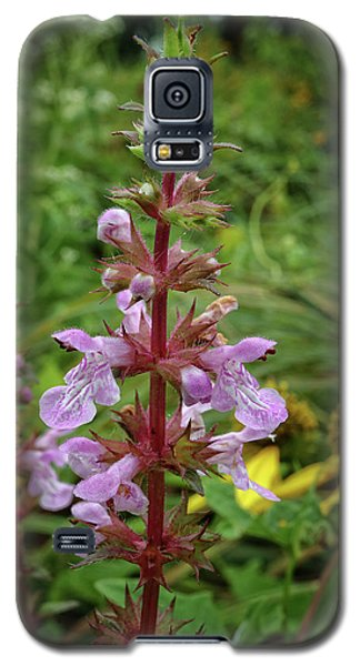 Galaxy S5 Case featuring the photograph American Germander by Scott Kingery