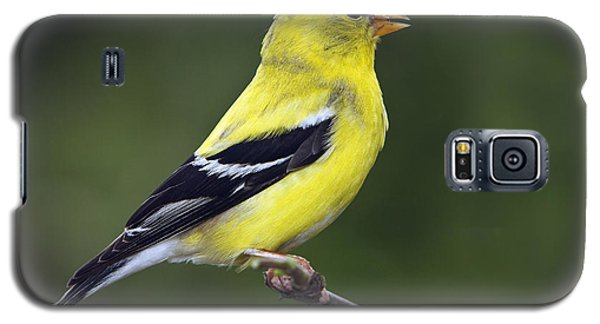 American Golden Finch Galaxy S5 Case
