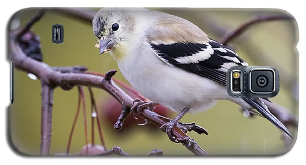 American Goldfinch In The Rain Galaxy S5 Case
