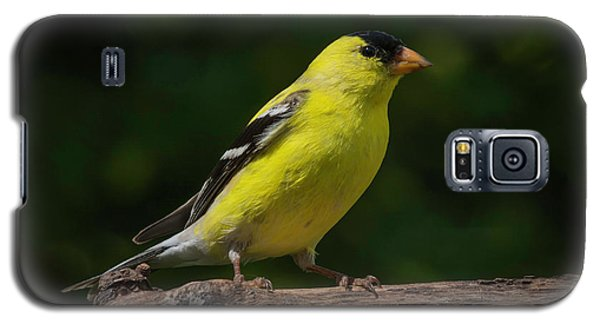 American Goldfinch Male Galaxy S5 Case