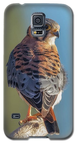 Galaxy S5 Case featuring the photograph American Kestrel 3 by Angie Vogel