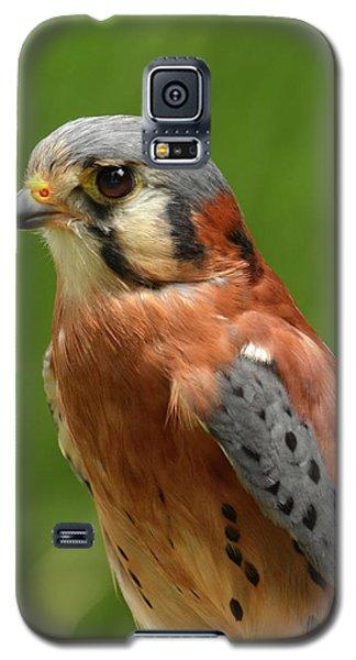 Galaxy S5 Case featuring the photograph American Kestrel by Ann Bridges