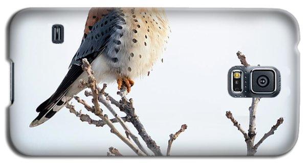 American Kestrel At Bender Galaxy S5 Case