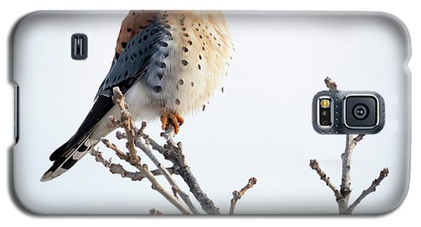 American Kestrel At Bender Galaxy S5 Case