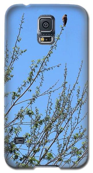 American Kestrel Atop Pecan Tree Galaxy S5 Case