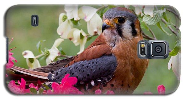 American Kestrel In The Springtime Galaxy S5 Case