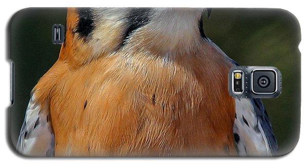 American Kestrel Portrait  Galaxy S5 Case