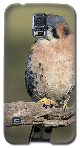 American Kestrel Portrait - Winged Ambassadors Galaxy S5 Case