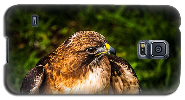 American Kestrel Profile Galaxy S5 Case
