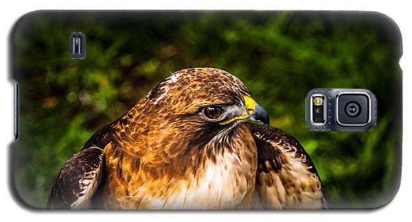 American Kestrel Profile Galaxy S5 Case