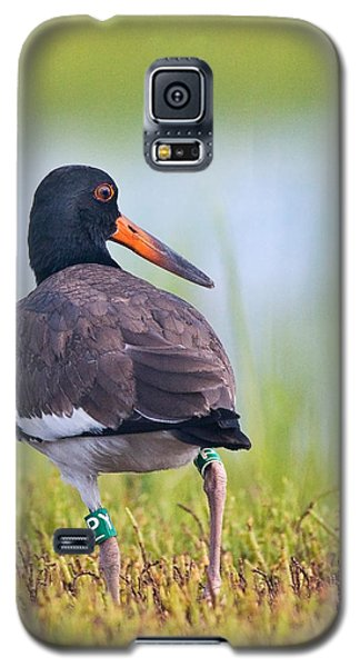 Galaxy S5 Case featuring the photograph American Oyster Catcher by Bob Decker