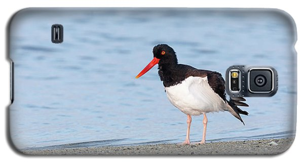 American Oystercatcher Galaxy S5 Case