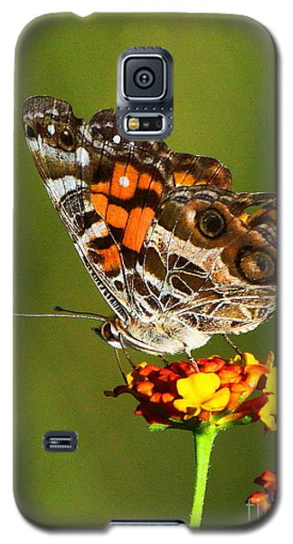 American Painted Lady Galaxy S5 Case