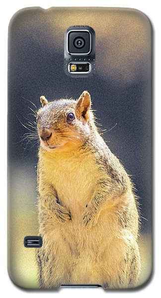 American Red Squirrel Galaxy S5 Case