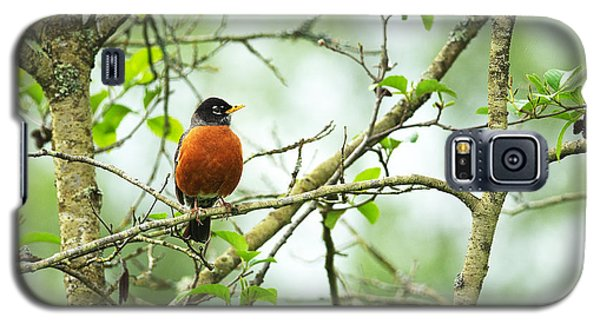 American Robin On Tree Branch Galaxy S5 Case