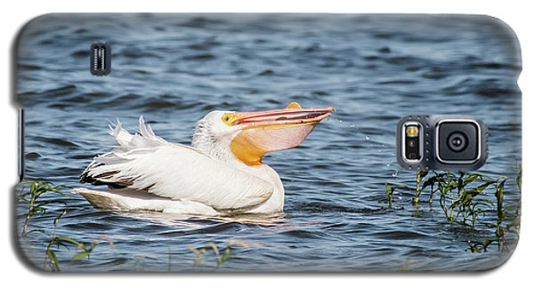 American White Pelican Male Galaxy S5 Case by Robert Frederick