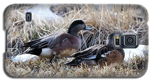 American Wigeon Mated Pair Galaxy S5 Case