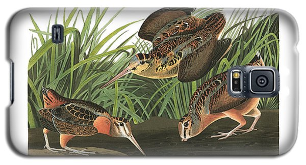 American Woodcock Galaxy S5 Case by MotionAge Designs