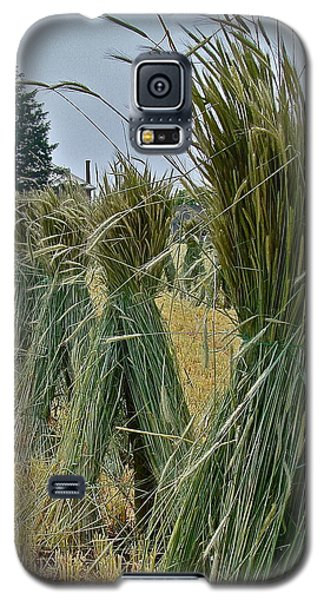 Amish Harvest Galaxy S5 Case