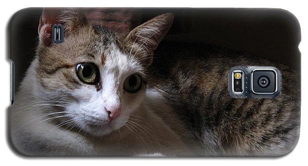 Ammani The Cat Galaxy S5 Case