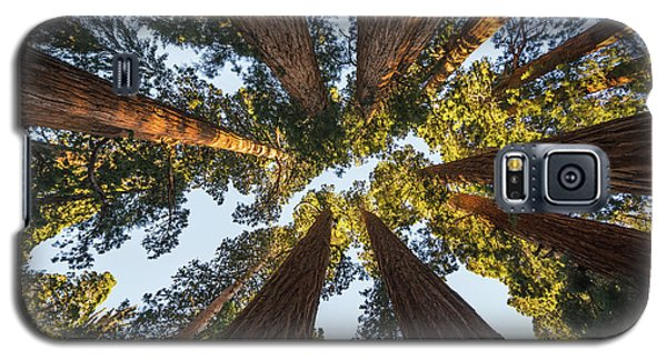 Amongst The Giant Sequoias Galaxy S5 Case