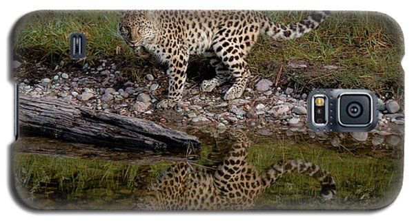 Amur Leopard Reflection Galaxy S5 Case